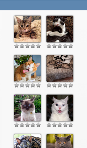 Cat puzzle free