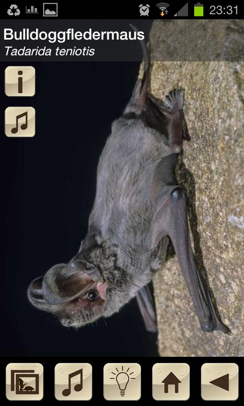 Swiss Bats- screenshot