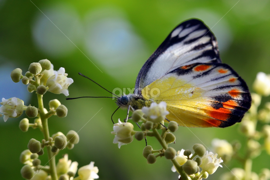 Morning Activity by Ray Alexander - Animals Insects & Spiders ( butterfly, colorful, green, morning, flower,  )