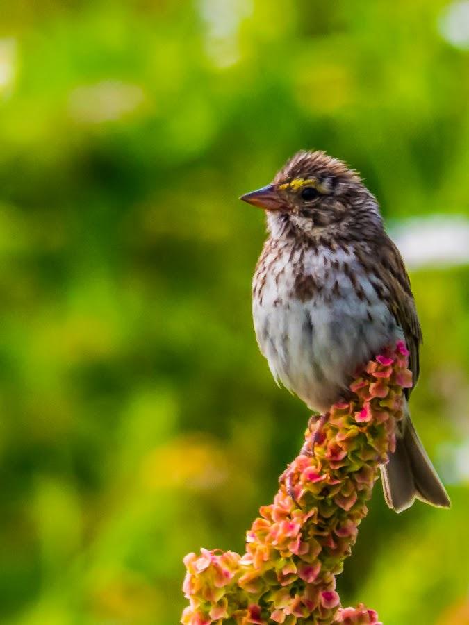 Oiseau by Bertrand Lavoie - Animals Birds ( oiseau, birds )