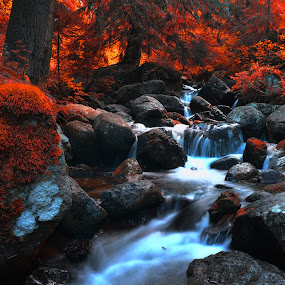 Bloody autumn by Stani Georgiev - Landscapes Forests ( stream, colors, three, autumn colors, water fall )