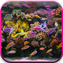 Aquarium Video Live Wallpaper icon