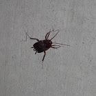 Roach?