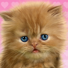 Baby Cat, Cute Live Wallpaper icon