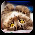 zz[Unpublish]Cutest Cat icon