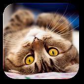 Cutest Cat Live Wallpaper