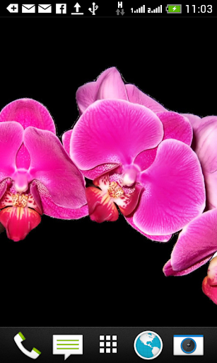 Orchids Shift Wallpaper Free