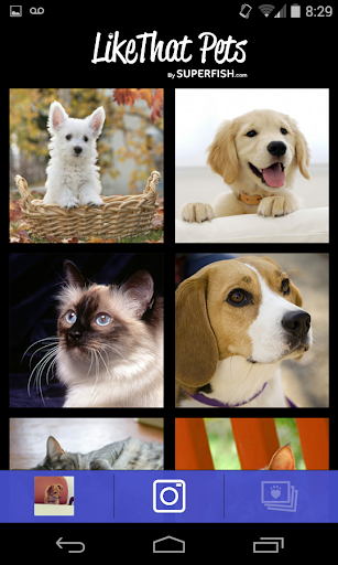 LikeThat Pets: Adopt a Pet