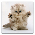 Cat Wallpapers! APK for Bluestacks