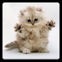 Cat Wallpapers! 3.6.8