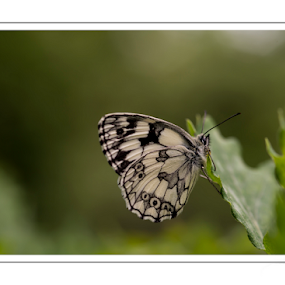 Flutterby by Stuart Wilson - Animals Insects & Spiders