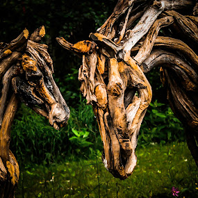 wooden soul by Adrian Kurbegovic - Artistic Objects Other Objects ( wooden, horses, near by, close up,  )