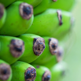 Not ready yet by Callum Harris - Food & Drink Fruits & Vegetables ( macro, fruit, green, bokeh, bannanas,  )