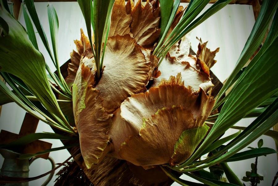 by Susan Davidson - Nature Up Close Other plants