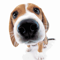 Big Nose Puppy icon