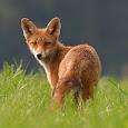 2012 Best Wildlife Photo