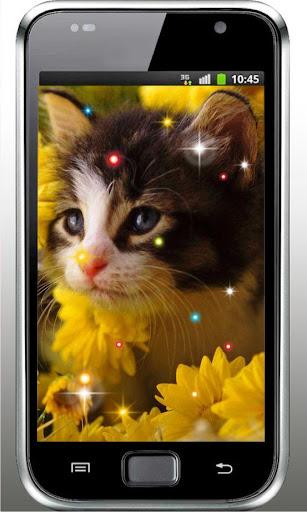 Hello Cute Kitty livewallpaper