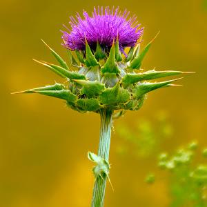 wildflower0010.jpg