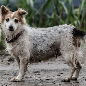Poor Wet Dog by Wong Koh - Animals - Dogs Portraits ( poor, puppy, wet, dog, rain )
