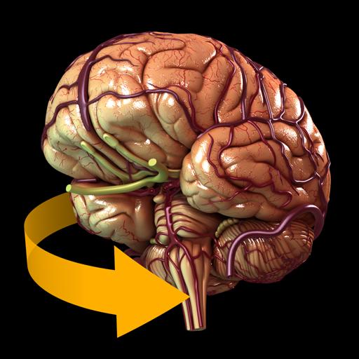App Insights Brain 3d Anatomy Apptopia