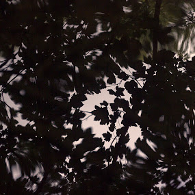 Reflected Leaves by Steve Hird - Abstract Patterns ( abstract, water, reflection, nature, pattern, reflections, leaves, natural, coventry )