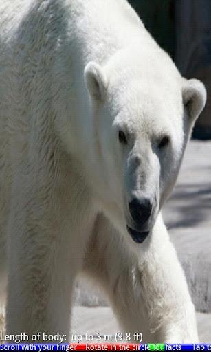 Wild Animals of the Arctic