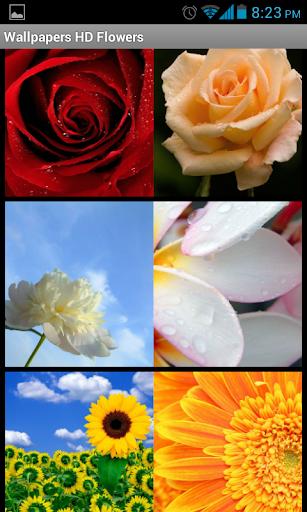 Wallpapers HD Flowers