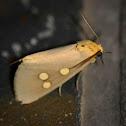 Dice Moth