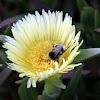 Abelha na flor