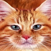 Sweet Cat Pets Wallpaper