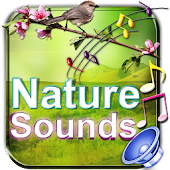 Nature Sounds To Relax Sleep