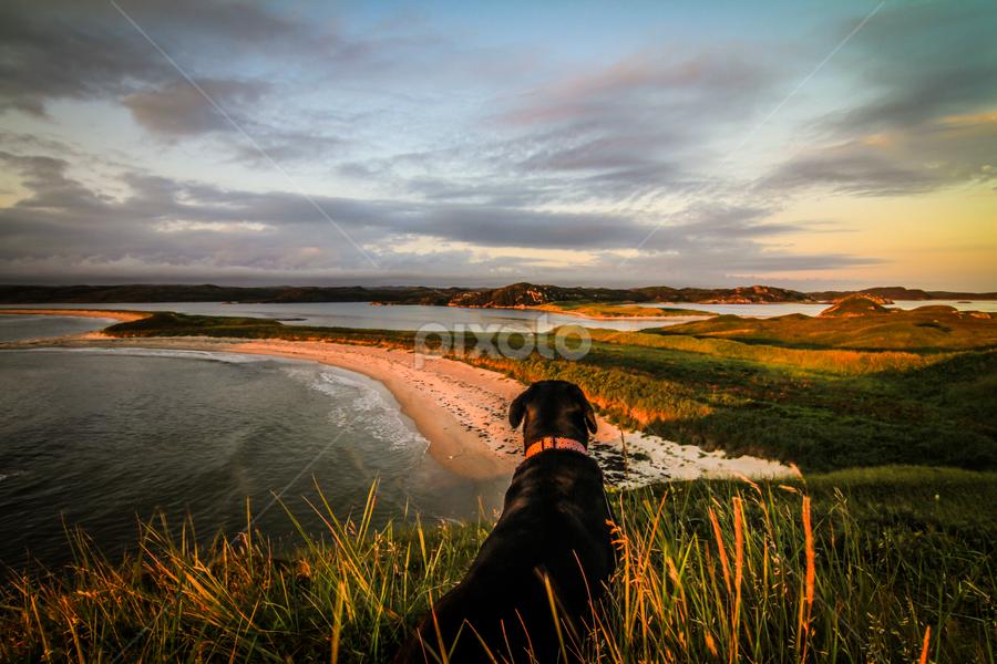 Dog enjoying the View by Eugene Ball - Landscapes Beaches ( beaches, newfoundland, scenery, dog, labrador )