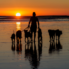 A Walk on the beach at sunset by Cheryl Nestico - Animals - Dogs Portraits ( dogs, sunset, rocky point, silhouette,  )