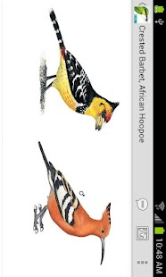 Sasol eBirds (Lite)- screenshot thumbnail