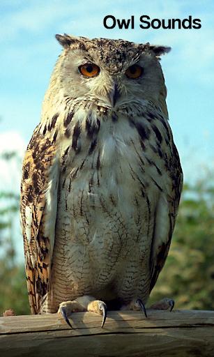 Owl Sounds
