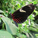 Doris Longwing