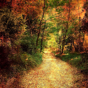 Autumn Colors by Sheila Marques - Landscapes Forests ( , renewal, green, trees, forests, nature, natural, scenic, relaxing, meditation, the mood factory, mood, emotions, jade, revive, inspirational, earthly )