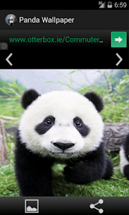 Panda Wallpaper Screenshot Thumbnail