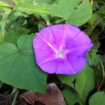 Guatemala Flora