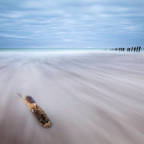 Driftwood  by Steve De Waele - Landscapes Beaches