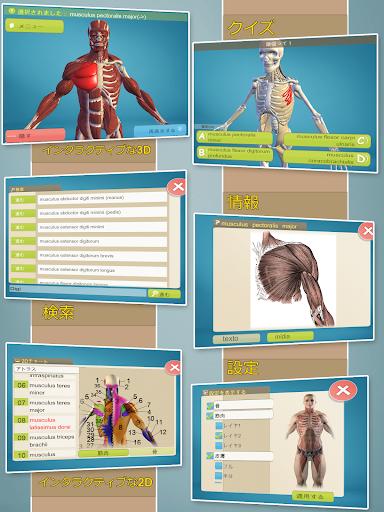 簡単な解剖学 3D