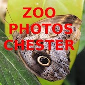 Zoo Photos Chester