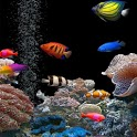 3D Live Fish Wallpaper icon