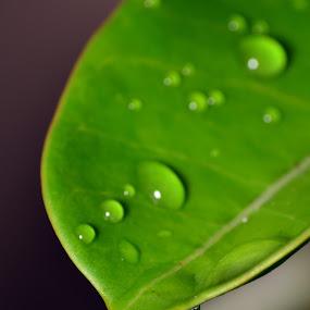 by Imal Prayitno - Nature Up Close Leaves & Grasses