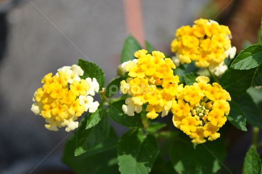 Tiny Yellow Flower Single Flower Flowers Pixoto