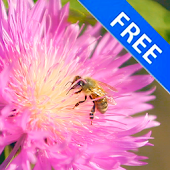 3D Bee on a Clover Flower Free