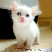 Cats Backgrounds