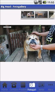 Allevamento Bulldog - Big Head- screenshot thumbnail