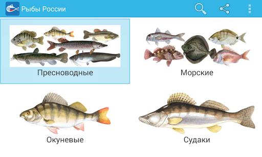 Рыбы России