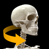 Skeletal System 3D Anatomy